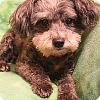 Adopt A Pet :: Mattie May - Wytheville, VA
