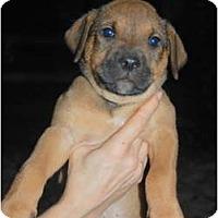 Adopt A Pet :: Jacob - Douglasville, GA