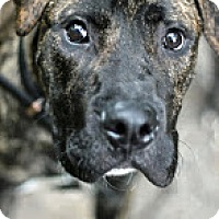 Adopt A Pet :: Tristan - Tinton Falls, NJ