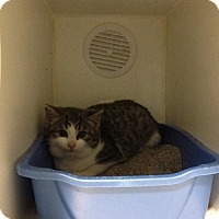 Adopt A Pet :: Boo - Hamilton, ON