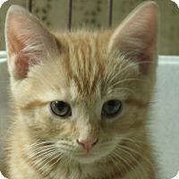 Adopt A Pet :: JOANIE - Acme, PA