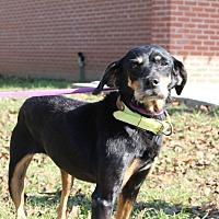 Adopt A Pet :: Kitty - Dawson, GA