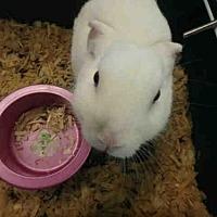 Adopt A Pet :: A1659647 - Los Angeles, CA