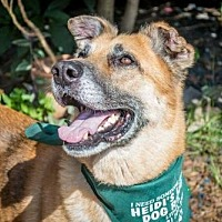 Adopt A Pet :: FLETCHER -16 St Pete Fl - Lithia, FL