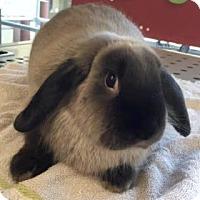 Adopt A Pet :: Ferdinand - Los Angeles, CA
