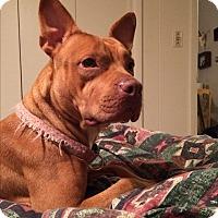 Adopt A Pet :: Mia - selden, NY