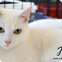 Adopt A Pet :: Ayla - Newport, KY