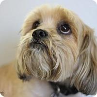 Adopt A Pet :: Django - Yukon, OK