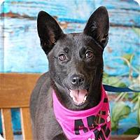 Adopt A Pet :: Joanie - Concord, NC