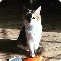 Adopt A Pet :: Callie - Dawson, GA