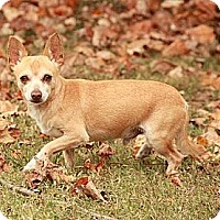 Adopt A Pet :: Morty Cider($200 adoption fee - Staunton, VA