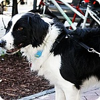 Adopt A Pet :: Riley (Courtesy Listing) - Savannah, GA