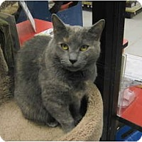 Adopt A Pet :: Paisley - Warminster, PA