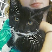 Adopt A Pet :: Costello - Riverhead, NY