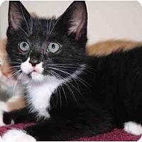 Adopt A Pet :: Libbey - Markham, ON