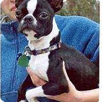 Adopt A Pet :: Shrimpy - Clementon, NJ