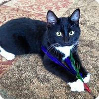 Adopt A Pet :: Hop - Plymouth, MN