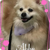 Adopt A Pet :: Abby - Greensboro, MD