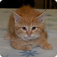 Adopt A Pet :: Luigi - Medina, OH