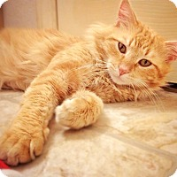 Adopt A Pet :: Mr. Pawsome - Arlington/Ft Worth, TX