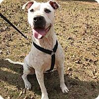 Adopt A Pet :: Sherman - Elmsford, NY
