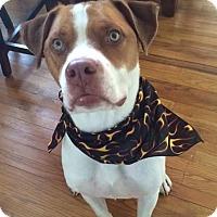 Adopt A Pet :: Jake - Pembroke, GA