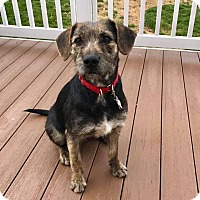 Adopt A Pet :: Holly - New Oxford, PA