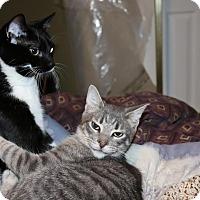 Adopt A Pet :: Smokey - Lindsay, ON