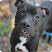Adopt A Pet :: NOLAN - Fort Lauderdale, FL