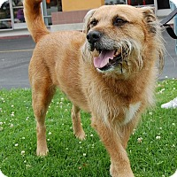 Adopt A Pet :: Courage - West Los Angeles, CA