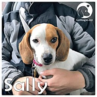 Adopt A Pet :: Sally - Pittsburgh, PA