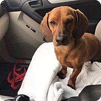 Adopt A Pet :: Charlie - Peyton, CO