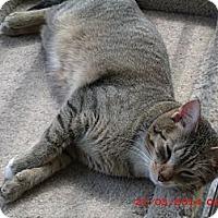 Adopt A Pet :: Tigger - Acme, PA