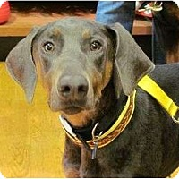 Adopt A Pet :: Ozzie--adopted!! - New Richmond, OH