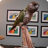 Adopt A Pet :: Queso - Redlands, CA