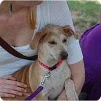 Adopt A Pet :: Dali - Cumming, GA