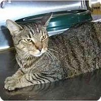 Adopt A Pet :: Zeus - New Port Richey, FL