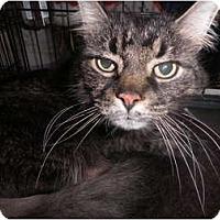 Adopt A Pet :: Davinci - Warren, MI
