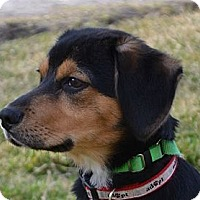 Adopt A Pet :: Cooper~Adopted! - Troy, OH