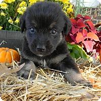 Adopt A Pet :: Hudson - Millersville, MD