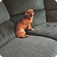 Adopt A Pet :: Dolly - Hampton, VA