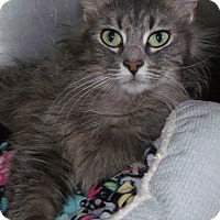 Adopt A Pet :: melody - Muskegon, MI