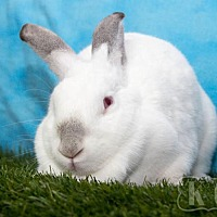 Adopt A Pet :: Michelle - Pflugerville, TX