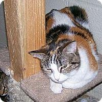 Adopt A Pet :: Katrina - Scottsdale, AZ