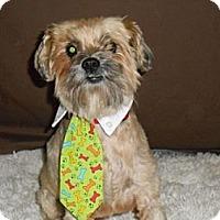 Adopt A Pet :: Dusty - Lockhart, TX