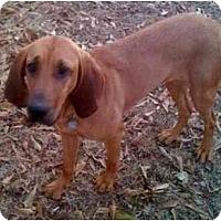 Adopt A Pet :: Georgia Ann - Carrollton, GA