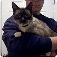 Adopt A Pet :: Ali  2 - Port Republic, MD