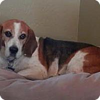 Adopt A Pet :: Milo Dear - Phoenix, AZ
