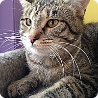 Adopt A Pet :: Kate Winslet - Richboro, PA