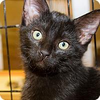 Adopt A Pet :: Soski - Irvine, CA